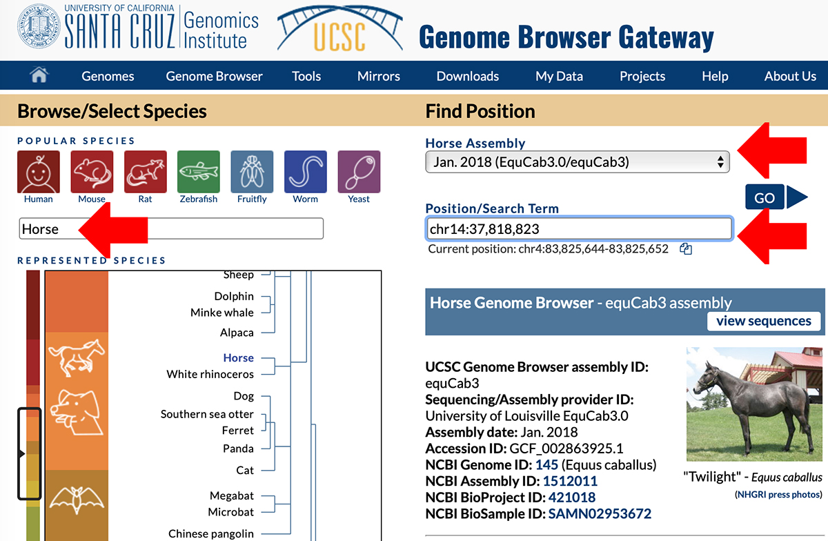 Screenshot of UCSC Genome Browser Gateway